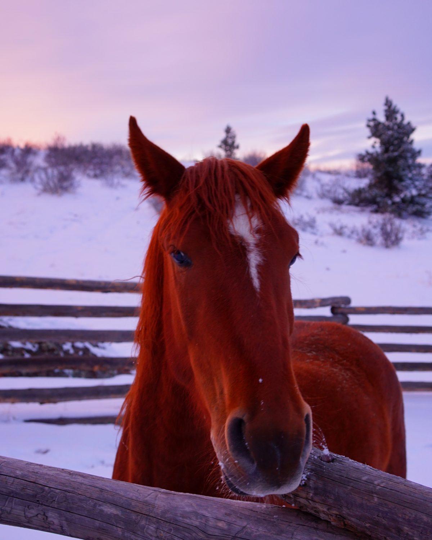 <em>portraits in a snowy sunset</em>